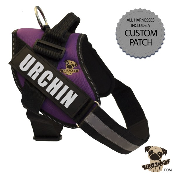 Rigadoo Dog Harness - Urchin